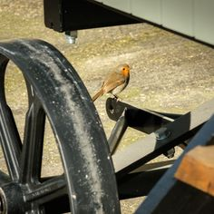 Robins often nest in the Plankbridge workshop