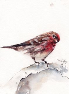 Bird Painting Original Watercolor Painting Bird by CanotStop