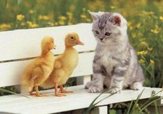 animals adorable 16 Daily Awww: A whole buncha cute animals (30 photos)