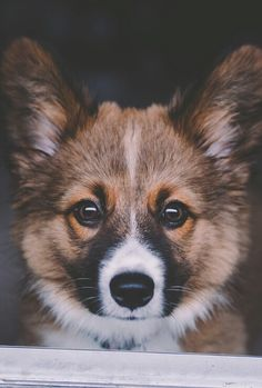 dog on We Heart It - https://bnc.lt/l/4Zz1vXE_R9