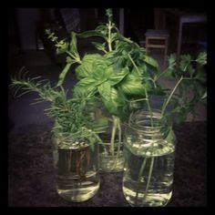 Center Piece idea for thanksgiving.    http://thismustbetheplaceryan.blogspot.com/2011/11/fresh-herbs-in-jar-center-piece.html