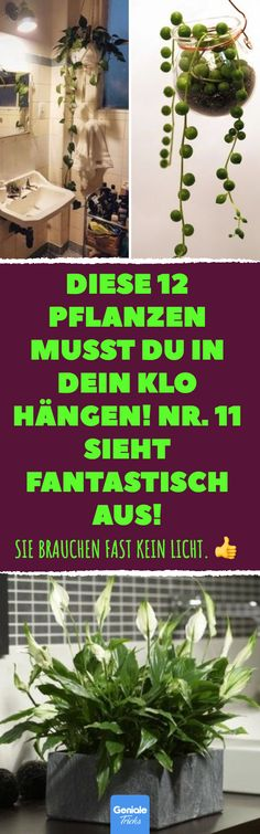 Diese 12 Pflanzen musst du in dein Klo hängen! Id… You have to hang these 12 plants in your loo! Number 11 looks fantastic! Ideal for the bathroom: 12 plants that hardly need sunlight. Garden Care, Cactus Flower, Cactus Plants, Cactus Care, Hanging Plants, Indoor Plants, Pot Jardin, Little Gardens, Plantation