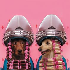 Two dogs sit beneath hair dryers in a beauty salon and gossip with their fur in curlers in this funny dog photo. One of the dogs is a Irish Setter while the other is a golden lab.
