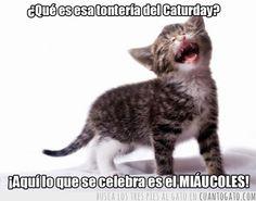 12831 - Hoy es MIÁUCOLES!