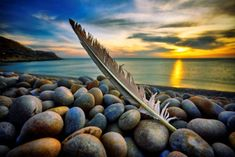 Feather on a pebble beach at sunset