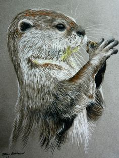 River Otter by ChalkyCanvas on DeviantArt : River Otter by ChalkyCanvas on DeviantArt Animal Sketches, Art Drawings Sketches, Animal Drawings, Otter Tattoo, Scratchboard Art, Otter Love, Yorky, River Otter, Animal Magic