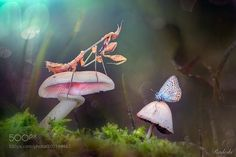 The enchanted forest by Radeski