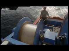 Fisherwoman catches world record 411.6kg TUNA worth $2m or 1769 tins after 4hr battle - New Zealand - YouTube