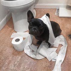 #dogs #dogstagram #dogsrule #