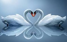 First Wall Art - Two Swans Make Up A Heart Reflected On Water Wall Art Painting The Picture Print On Canvas Animal Pictures For Home Decor Decoration Gift ** Read more at the image link. (This is an affiliate link) Swan Pictures, Print Pictures, Animal Pictures, Mosaic Pictures, Painting Pictures, Funny Pictures, Swan Wallpaper, Drawing Wallpaper, Life Tips