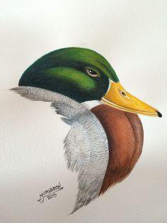 Watercolour mallard