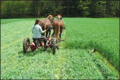 This article is a great example of how farming with horses is economically sustainable. Farm Life Quotes, Farm With Animals, Four Horses, Big Horses, Canadian Horse, Farm Images, Sustainable Farming, Sustainability, Farm Tools