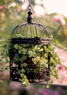 How to Use a Decorative Bird Cage! | The Radish Pa...