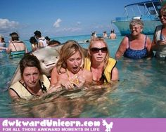 Funny pictures about Pervert Stingray kills it with the ladies. Oh, and cool pics about Pervert Stingray kills it with the ladies. Also, Pervert Stingray kills it with the ladies. Can't Stop Laughing, Laughing So Hard, Funny Photos, Cool Photos, Images Photos, Perfectly Timed Photos, Funny Girls, Funny Women, Angst