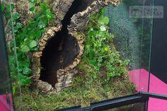 Image result for terrestrial tarantula enclosure
