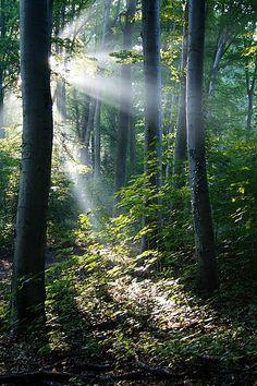 A beautiful forest sunrise