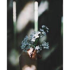 Iconosquare – Instagram webviewer