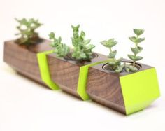 The Boxcar planter by Joe Gibson for Revolution Design House is hand-made from solid Walnut. Nest the three planters together along a window sill or as a table top center-piece.  This is a set of three solid Walnut wood planters with a clear finish and blue accents. Also includes three stainless-steel inserts to plant within, please do NOT plant directly into wood hole.  Plants are not included. Succulent style plants are highly recommended.  Dimensions: planter set - 3 h x 3 d x 13 long…
