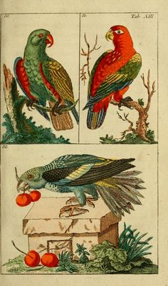 Gottlieb Tobias Wilhelm - Conversations from the Natural History of Birds - 1795