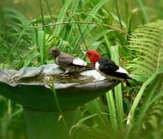 red-headed woodpeckers enjoying a drink at a birdbath Wildlife Gardening How To Make Compost, Canadian Wildlife, Different Birds, Woodpeckers, Birds And The Bees, Romantic Scenes, Humming Bird Feeders, My Secret Garden, Small Birds