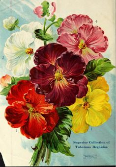1914 - Miss Ella V. Baines the woman florist Springfield, Ohio : - Biodiversity Heritage Library