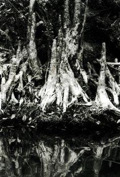 Swamp Thang, Bogalusa, Louisiana