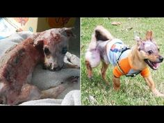 Thank you Animals Asia <3. You all define love, compassion and action! Tuffy - a dog who refused to be beaten by cruelty