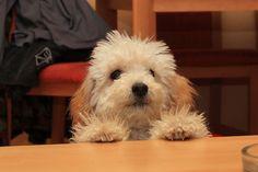 Hunde Foto: Michaela und Maya - Mein Engel Hier Dein Bild hochladen: http://ichliebehunde.com/hund-des-tages  #hund #hunde #hundebild #hundebilder #dog #dogs #dogfun  #dogpic #dogpictures