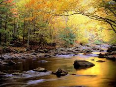 Fall Mountain Stream