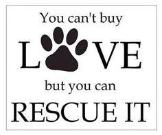 #seespotrescued #adoptdontshop #rescue #jerseycity #dogs