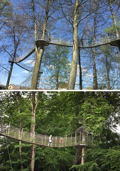 Much like suspension bridges, tree top walks are a great way to get close to nature and see the world from a new perspective. The series of bridges that make up these tree top walks are usually sus…