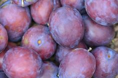 Plums are a valuable addition to a suitable permaculture plot, as their fruit can be eaten fresh, are ideal for baking, and plum trees typica Types Of Plums, Types Of Fruit, Pigs Eating, Health Site, Fruits Images, Bountiful Harvest, Plum Tree, Free Fruit, Food Now