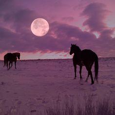 indigodreams:  redwingjohnny:  Sunrise Moon Walk byJudy Grant