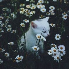 Imagen de cat, flowers, and white