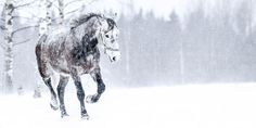 ITIL Foundation and certification -kurssi Moose Art, Foundation, Horses, Animals, Friends, Amigos, Animaux, Animales, Horse