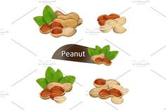 Peanut kernel in nutshell with leaves set Graphics Peanut kernel in nutshell with green leaves set isolated on white background vector illustration. Or by studioworkstock