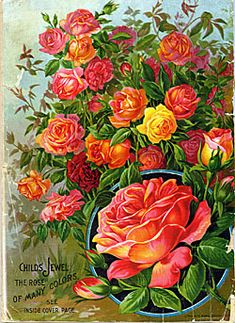 Catalog Information    Company Name:  John Lewis Childs    Catalog Title:  Rare Flowers, Vegetables & Fruits (1894)  Publication Information:  Floral Park, NY  United States  Category(ies) of Cover Art:  Roses