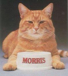 Nana LOVED Morris!