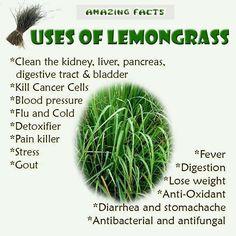 2oz Lemongrass Oil No Pesticides No GMO's Organic 100 Natural ...