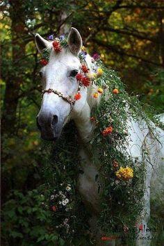 moonflowerchilde:  swansong-willows:  (via Pinterest)   °★ ☽ Do you believe in magick? ☾ ★ °