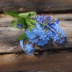 Outdoor Flowers, Starting A Garden, Forget Me Not, Landscape Photos, Spring Time, Blue Flowers, Make Me Smile, Flower Art, Flower Power