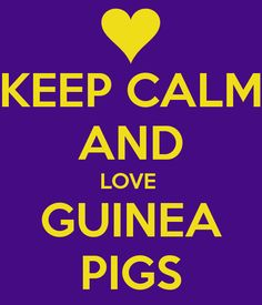 Google Image Result for http://sd.keepcalm-o-matic.co.uk/i/keep-calm-and-love-guinea-pigs-11.png