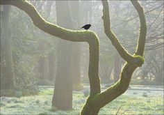 Morgennebel im März - Jahreszeiten - Galerie - Community