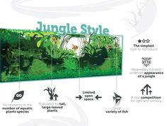 Jungle Aquascaping Style Infographic