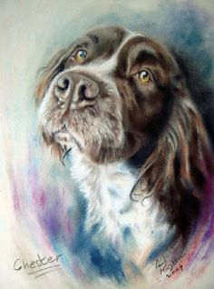 Pastels by Paul Knight (British) ~ Artists and Art Animal Paintings, Animal Drawings, Knight Art, English Springer Spaniel, Spaniel Dog, Color Pencil Art, Pastel Art, Wildlife Art, Dog Portraits