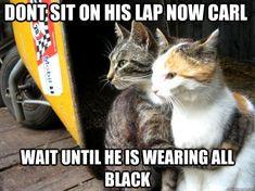 funny cats #funny #lol #gag @Funn Geeks