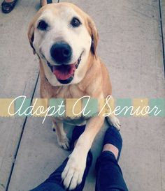 Adopt A Senior!  My dad said I would need a farm to take in every animal that I wanted to care for.  Vinny wants a dog, I'm just not emotionally ready yet.