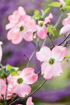 Love in Bloom | Rodale's Organic Life