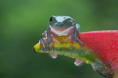The smiling frog :)