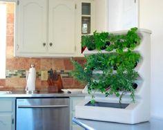 tabletop vertical herb garden